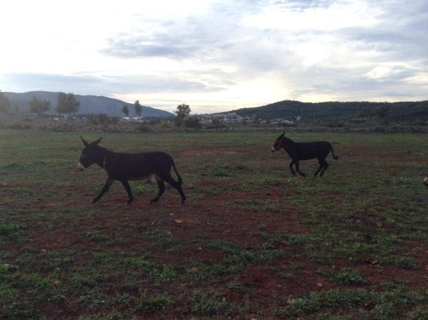 Look at them run!