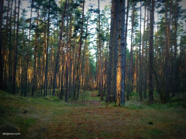 Riga forest